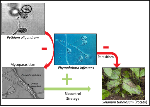 My Seaweed Looks Weird: An Introduction to Seaweed Parasites