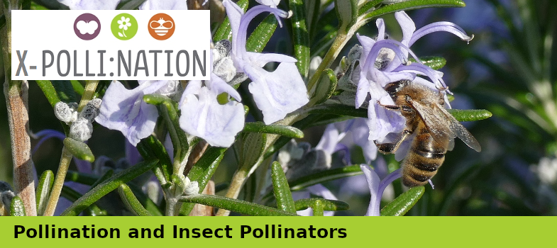 Pollination and Insect Pollinators