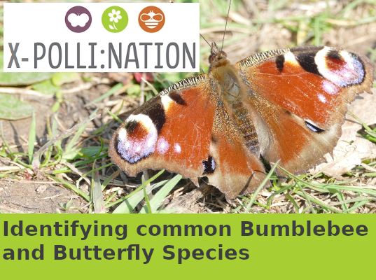 Identifying common Bumblebee and Butterfly species