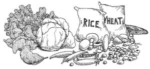 Leafy vegetables, beans, mushrooms, whole grains, a bag of rice and a bag of wheat