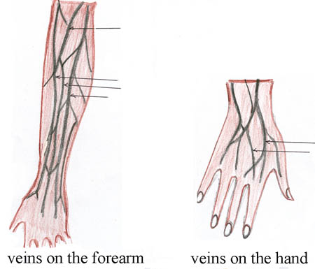 On the left is an image of the veins in the forearm and on the right is an image of the veins in the hand.
