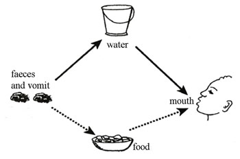 Main modes of transmission for most diarrhoeal diseases