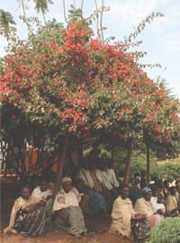 A group of people are gathered beneath the shade of a tree.