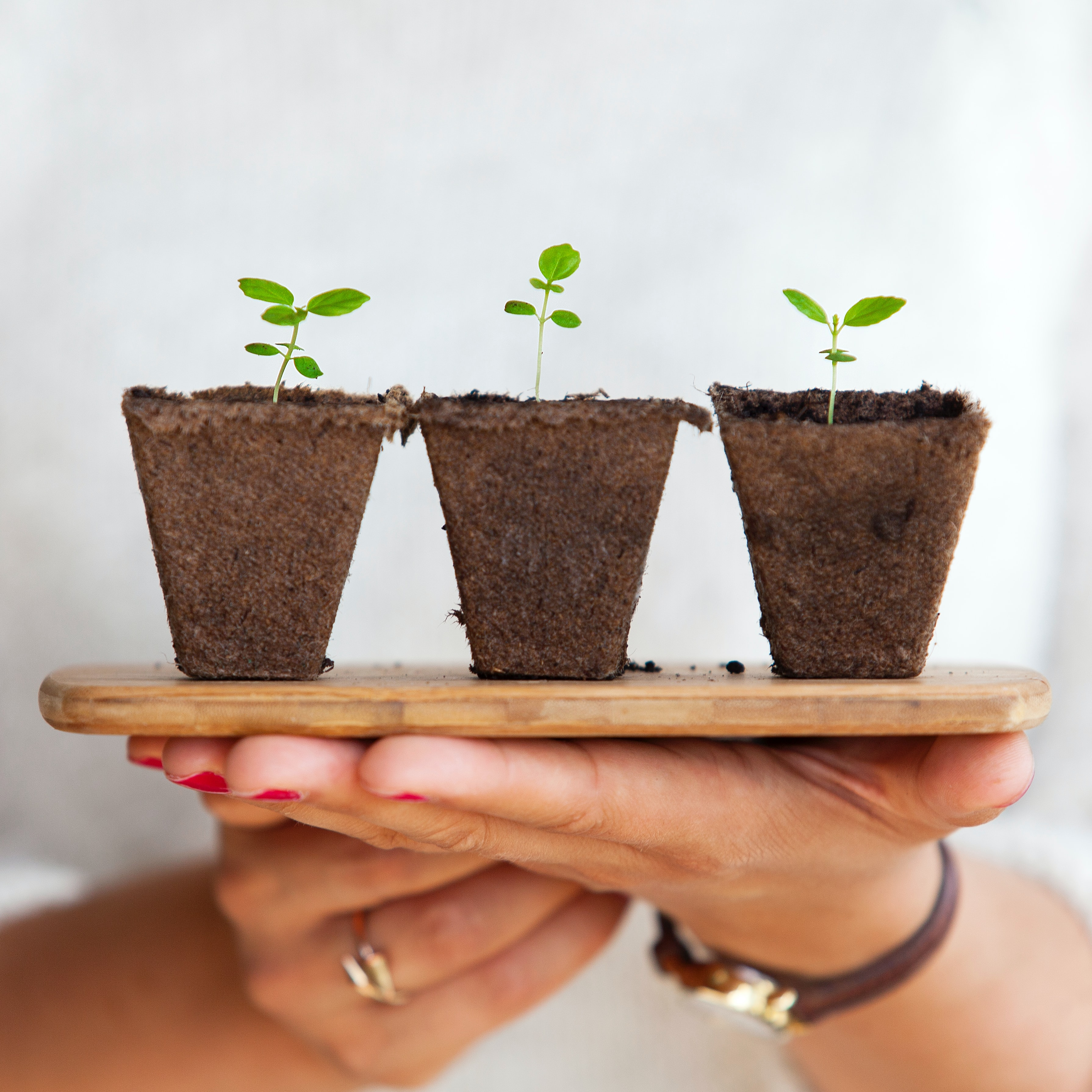 three small plants growing from soil held in someone's hands