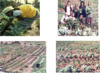 Pictures taken during a visit to women's income generating project