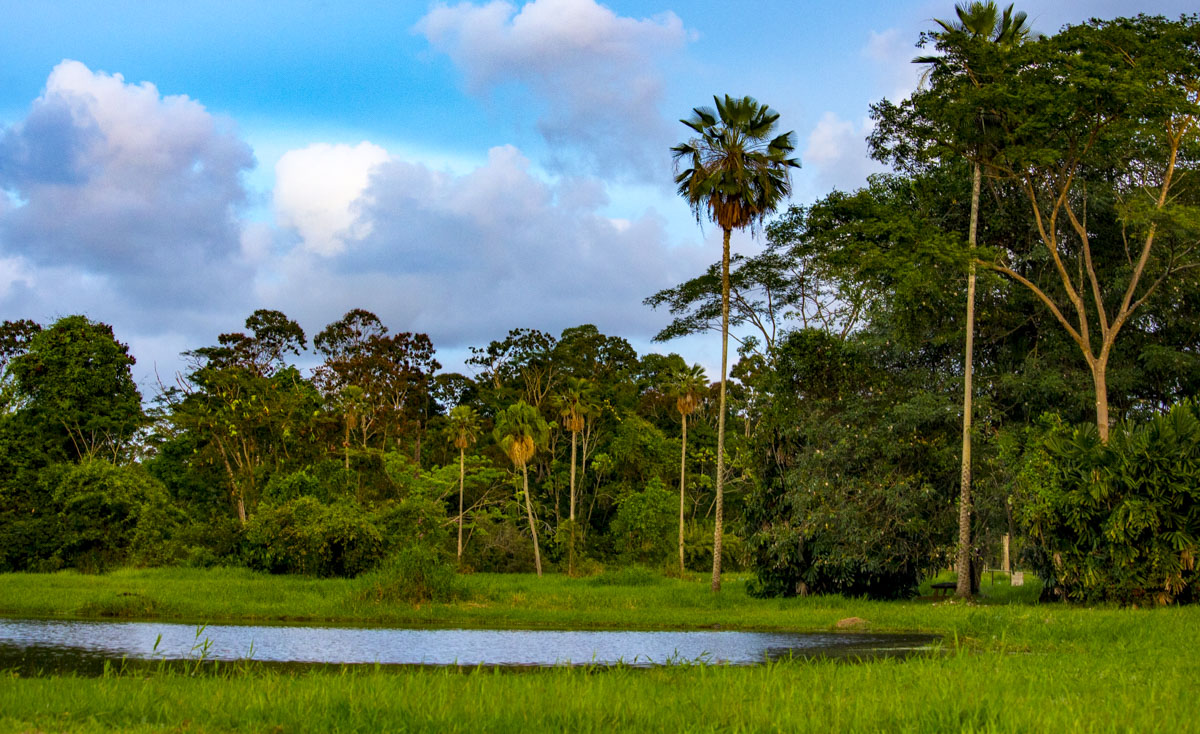 Tropical forest with a small lake in Guyana