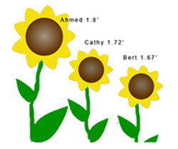 3 sunflowers, showing Ahmed 1.8, Cathy 1.72, and Bert 1.67
