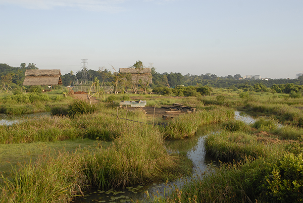 View of wetland habitats with plants and water