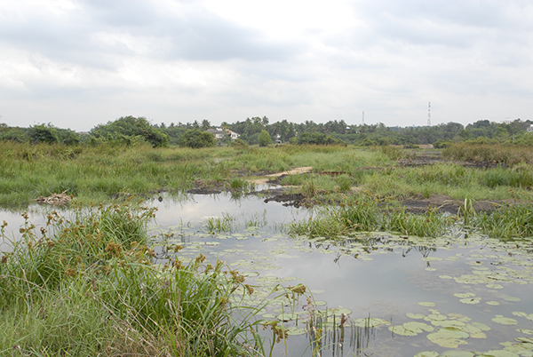 View of wetland habitats with pond and plants