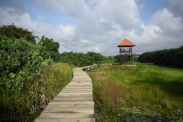 View of wetland habitats with a boardwalk for visitors and wildlife viewing tower
