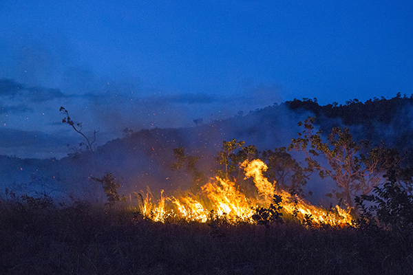 Photo of a fire burning in the savanna