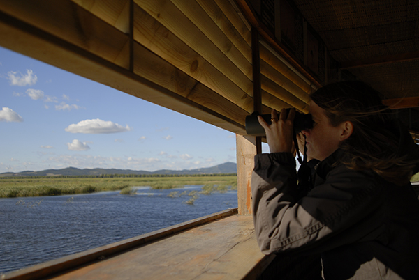 A photo of a person sitting in a wildlife viewing building using binoculars to survey birds