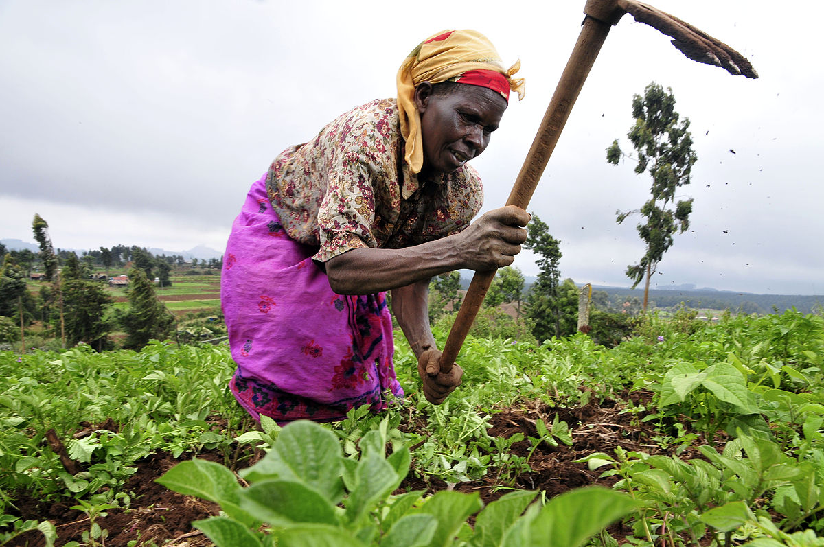 The resilience of co-operatives: lessons from Africa